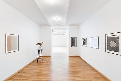 georg-kargl-fine-arts2021mark-dion22installation-view.jpg