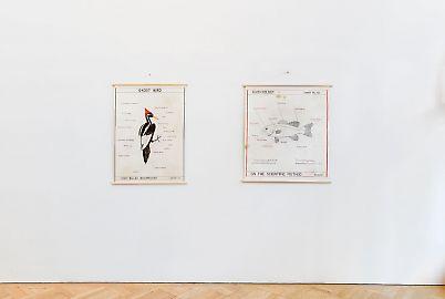 georg-kargl-fine-arts2021mark-dion27installation-view.jpg